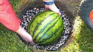 Wie man Wassermelone bis Silvester frisch hält! Zweites Experiment