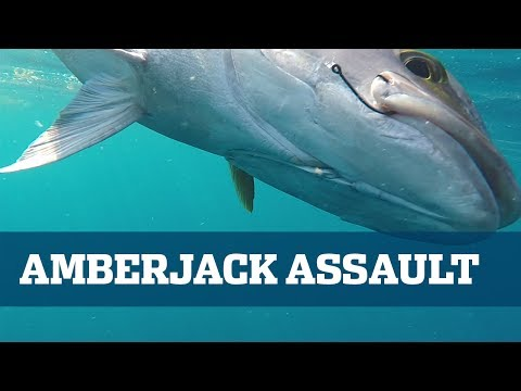 How To Catch Amberjack - Florida Sport Fishing TV