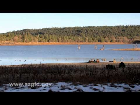 Arizona Duck Hunt.mov