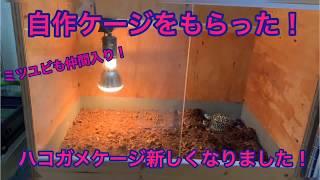 キタニシキハコガメ Terrapene ornata ケージを新しくしました! 自作ケ...