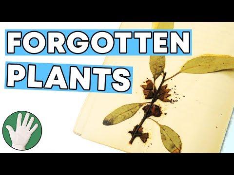 Forgotten Plant Specimens - Objectivity #139