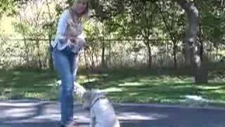 Wheaten Terriers: How To Teach Your Dog: Obedience Training Tips & Tricks : How To Train Your Wheaten Terrier To Come When Called