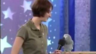 cockatoo talking