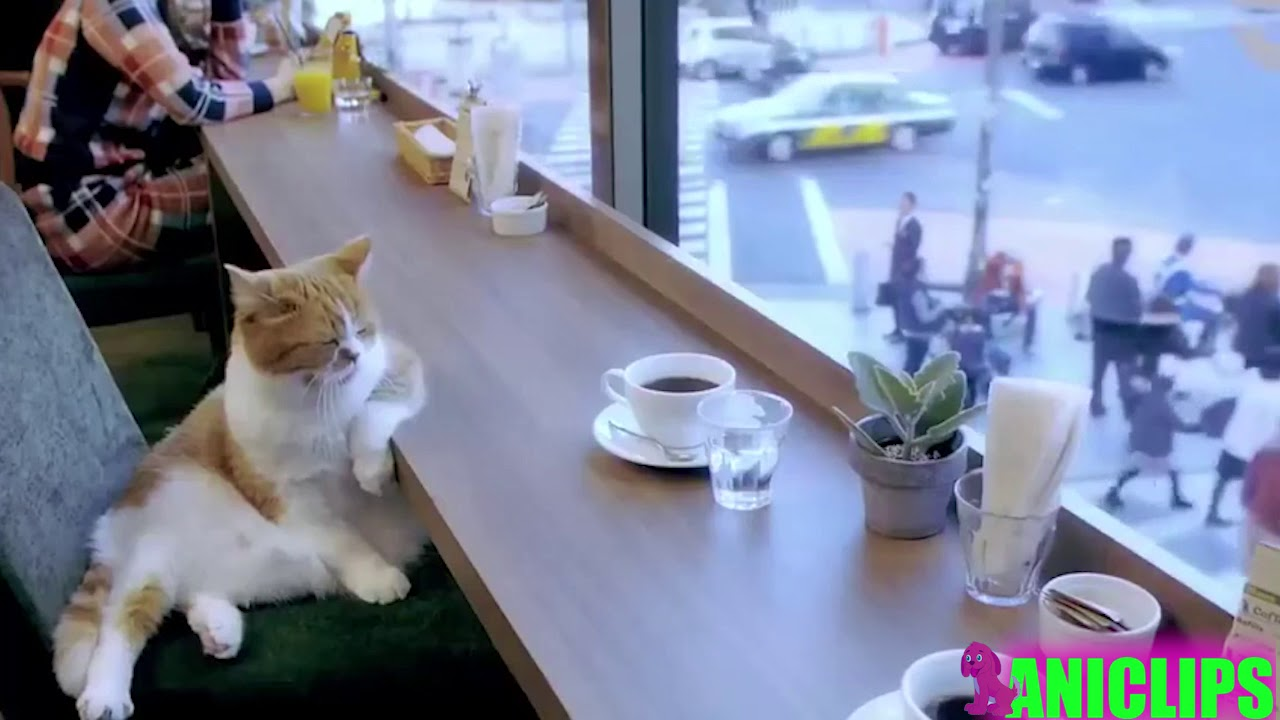 Cats Acting Like Humans - The Best Video Ever