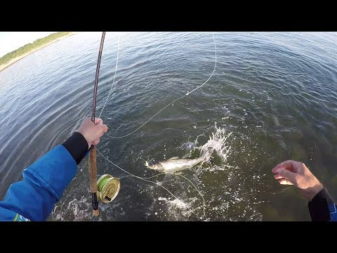 Timing Is Everything! Montauk Surf Fly Fishing Bass And Blues