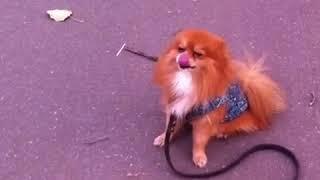 Дрессировка собак. Когда начинать учить собаку?