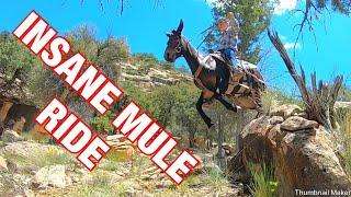 INSANE Rock crawling- Extreme Mule Riding