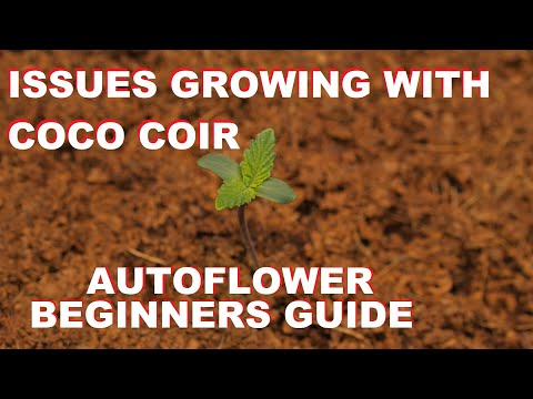 ISSUES WITH GROWING AUTOFLOWER CANNABIS IN COCO COIR ??? – DRAUTOFLOWERS BEGINNER GUIDE