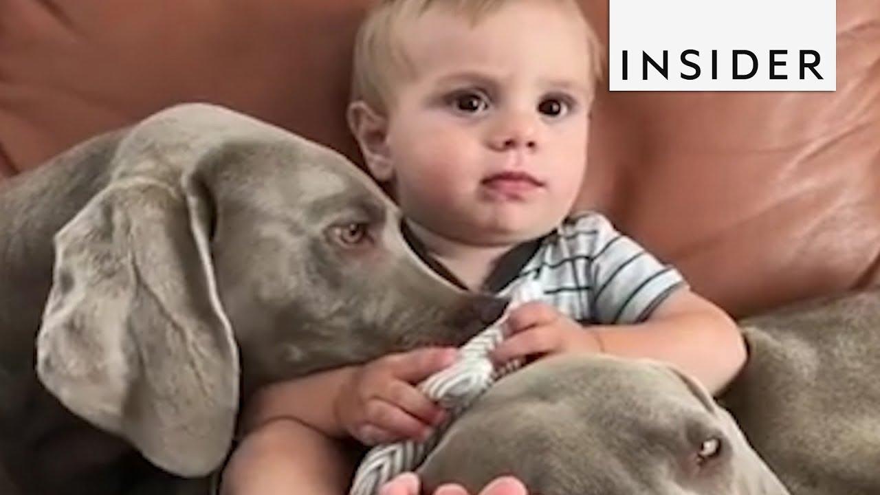 Зошто е добро децата да растат со миленичиња?