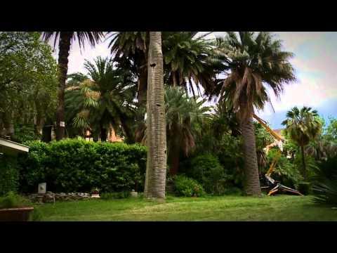 La Farmacia Del Verde - Come Salvare Una Palma Dal Punteruolo Rosso -