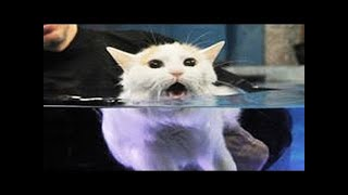 Cats Hate Water!   Funny Cats in Water Compilation 2020