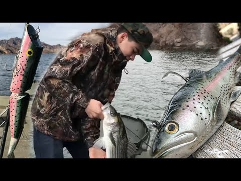 Fishing For Colorado River Monsters: Fishing Huge Swimbaits For Monster Striped Bass