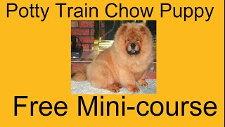 **ASAP** Potty Training Chow Puppy - Free Mini-course on Potty Training Chow Puppy