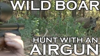 Extreme Airgun Hunting - Wild Boar with a Daystate Wolverine .303