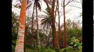 Retiro Yoga y ecología védica 12 - 19 Abril de 2014