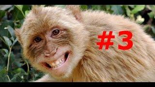 ЛУЧШИЕ ПРИКОЛЫ: смешные животные. Funny animals July 2015 (ВЫПУСК 3)