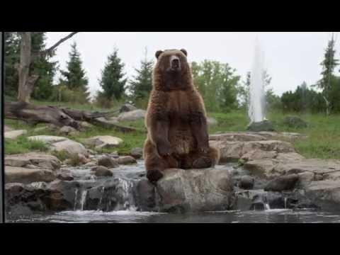 I Love the Minnesota Zoo