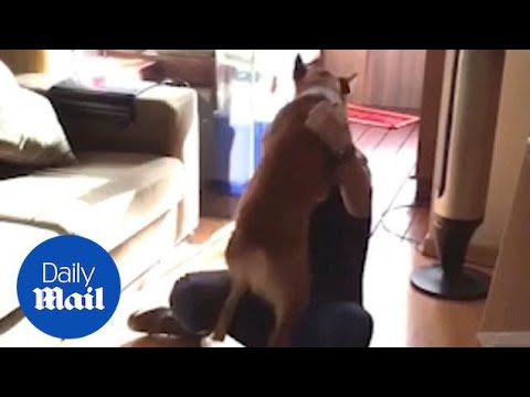 Excited dog reunited with crying owner after three years apart