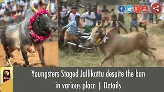 Youth staged Jallikattu despite the ban in various places | Details