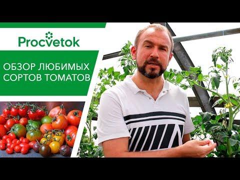 Любимые БЕЛОРУССКИЕ СОРТА ТОМАТОВ. О чем говорят ЛИСТЬЯ помидоров.