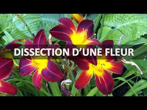 Dissection D Une Fleur Youtube