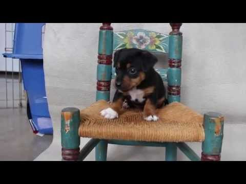 Ciara and Finnegan's puppy Bedeila