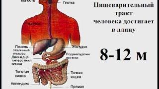!!!Пищеварительная Система Человека!!!  !!!Pishhevaritel'naja Sistema Cheloveka!!!