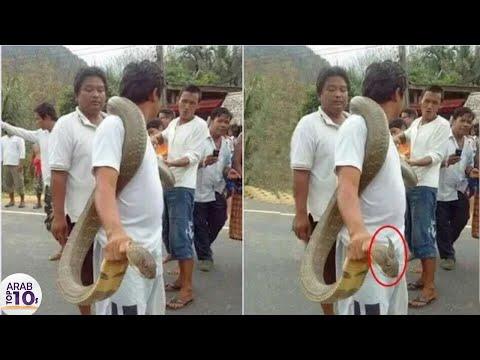 هذا هو اشجع شخص في العالم شاهد ماذا يفعل بالثعابين..!!