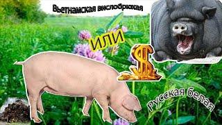 Сравнение свиней /Что выгодней / Какая порода лучше /Деревенская жизнь
