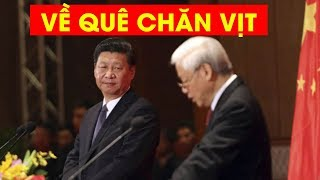 BÁO MỸ: Nguyễn PHú Trọng từ chức vì trái ý Tập Cận Bình #VoteTv