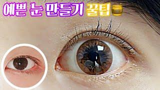 [셀프 속눈썹펌] 눈 커보이는 법 |동생 블랙핑크 속눈…
