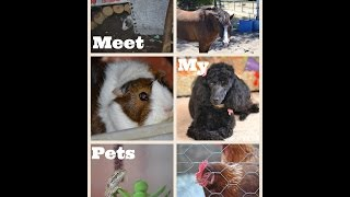 Meet My Pets - Part 1 - Amphibians, Small Animals, Reptiles and More