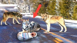 Волки трепали новорожденного малыша на дороге и никого не подпускали. А когда пришёл егерь...