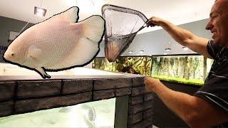 MONSTER FISH added to 2,000G AQUARIUM!!