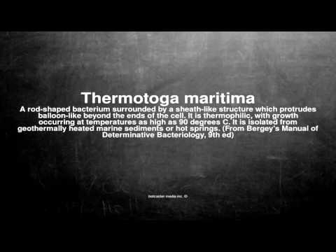 Medical vocabulary: What does Thermotoga maritima mean