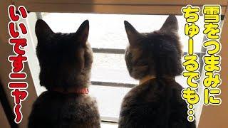 降りしきる雪をみて猫さん達は何を想う!?