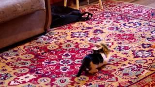 Котенок в добрые руки в Волжском