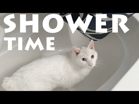 My Cat Likes Shower Time   Cute Siamese Kitty Addicted To Water