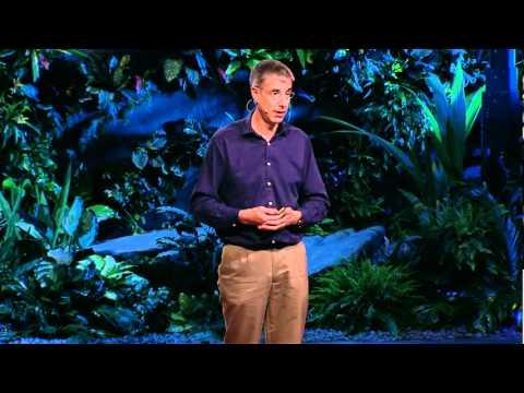 Даниэл Уолперт: Для чего на самом деле нужен мозг