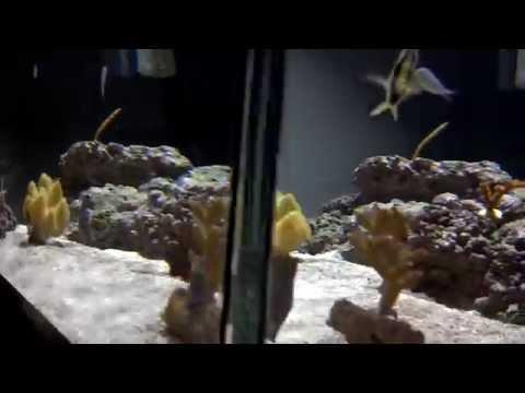 Reef Aquarium - Bottom up view April 2013