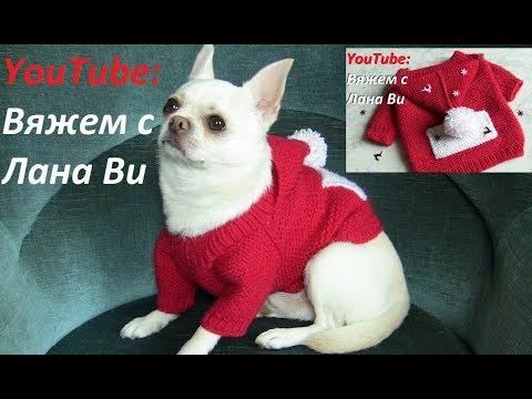 Одежда для собак своими руками вязание спицами