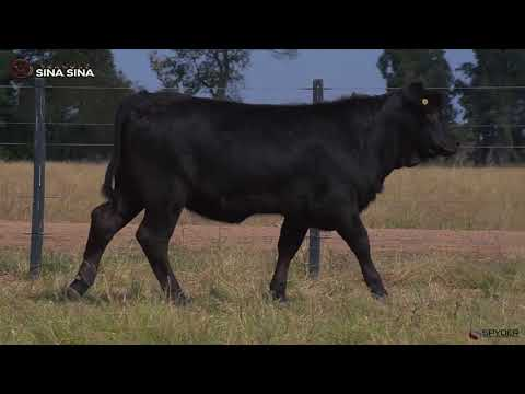 LOTE 154
