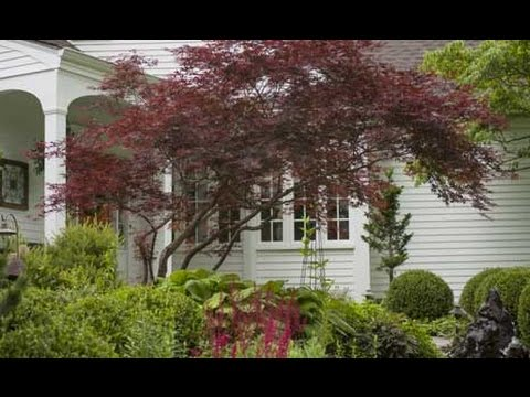 Small trees for limited space youtube for Slender trees for small spaces