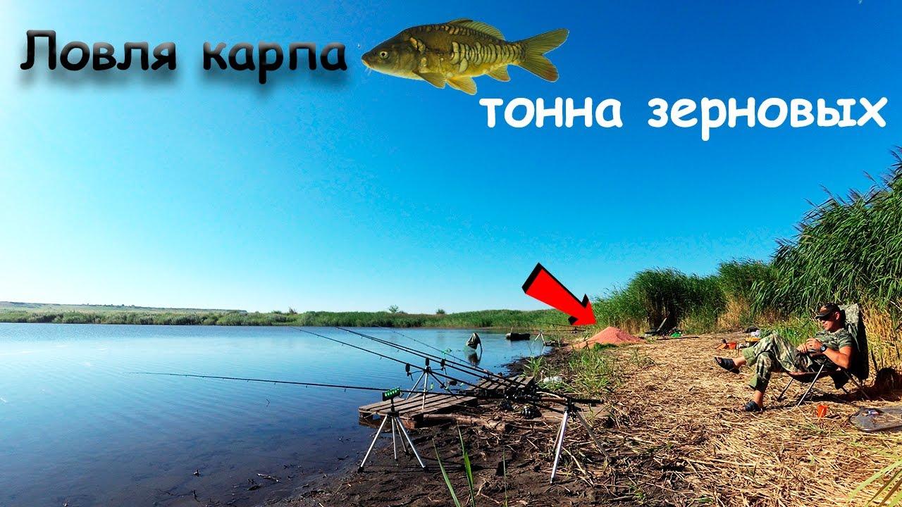 Ловля карпа🐟 на коммерческом водоеме. ТОННА ЗЕРНОВЫХ!!! Рыбалка с ночёвкой!!!