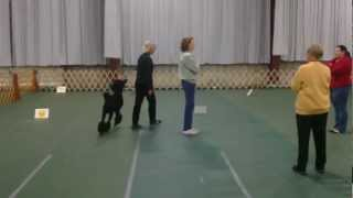 2nd Day At The Greater Columbia Obedience Trials Jan. 20th 2013