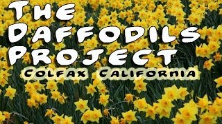 "The Daffodils Project ""For Eric Garcia"" - By Jim Bowers"