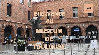 Bienvenue au Museum de Toulouse