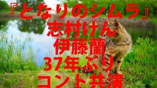 志村けん、伊藤蘭と37年ぶりコント共演 NHK『となりのシムラ』第2弾 オ...