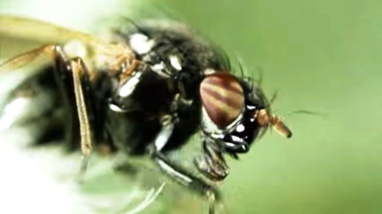 Facts About Flies - Secret Nature
