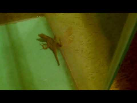 Copy of The cat's pet lizard.